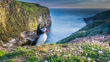 Skomer-Puffin-National-Lottery-Heritage-Fund