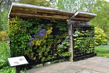 An example of a living wall at SNH's Battleby office © Alice Brawley/SNH