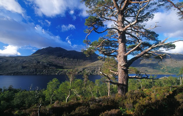 Native woodland at Beinn Eighe NNR ©Laurie Campbell/NatureScot