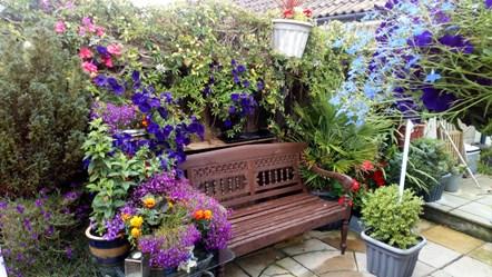 Winning small garden