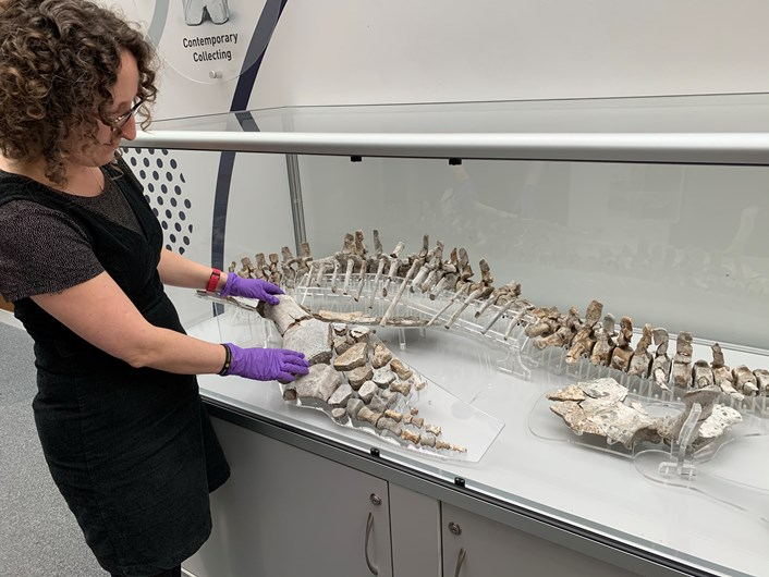 Ples to meet you as prehistoric predator finds new home: img-4707.jpg