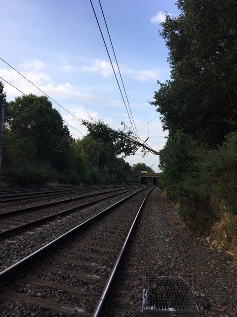 Thameslink passengers disrupted by tree falling onto overhead lines: Tree on powerlines St Albans 200718