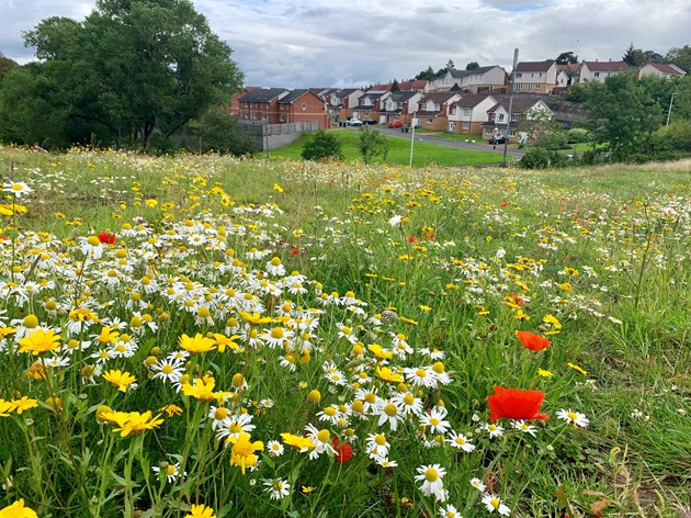 It's not too late to reverse biodiversity decline by 2030, UK's five leading nature bodies say: Fernbrae Meadows, South Lanarkshire - a derelict golf course transformed into a public greenspace. Credit NatureScot