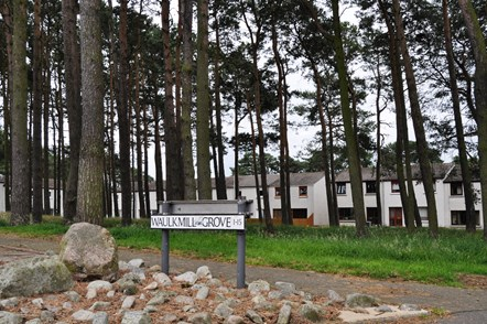 Elgin trees set to be felled