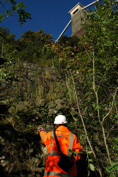 Rare plants at Avon Gorge get a chance to bloom