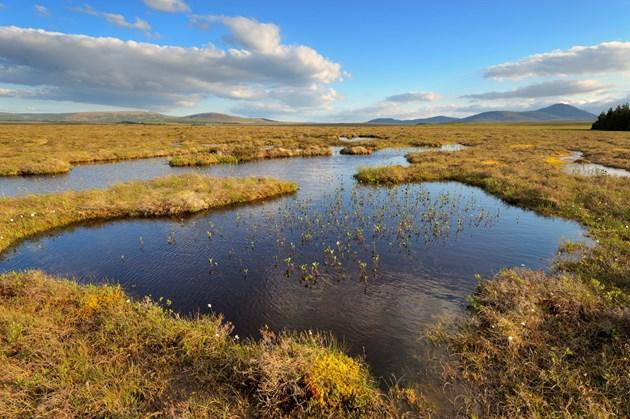 The Flows NNR, a blanket bog near Forsinard. Credit Lorne Gill/NatureScot