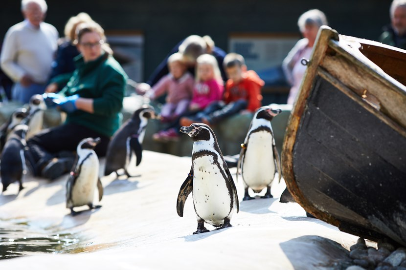 February fun for this half term: lothertonpenguins.jpg