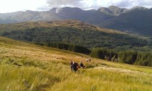 Coway Way - Scotland's Great Trails: Cowal Way - Scotland's Great Trails.