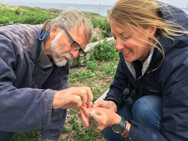 Rare tern breeds on the Isle of May: Dr Chris Redfern and Bex Outram SNH with Hybrid chick (credit SNH-David Steel)