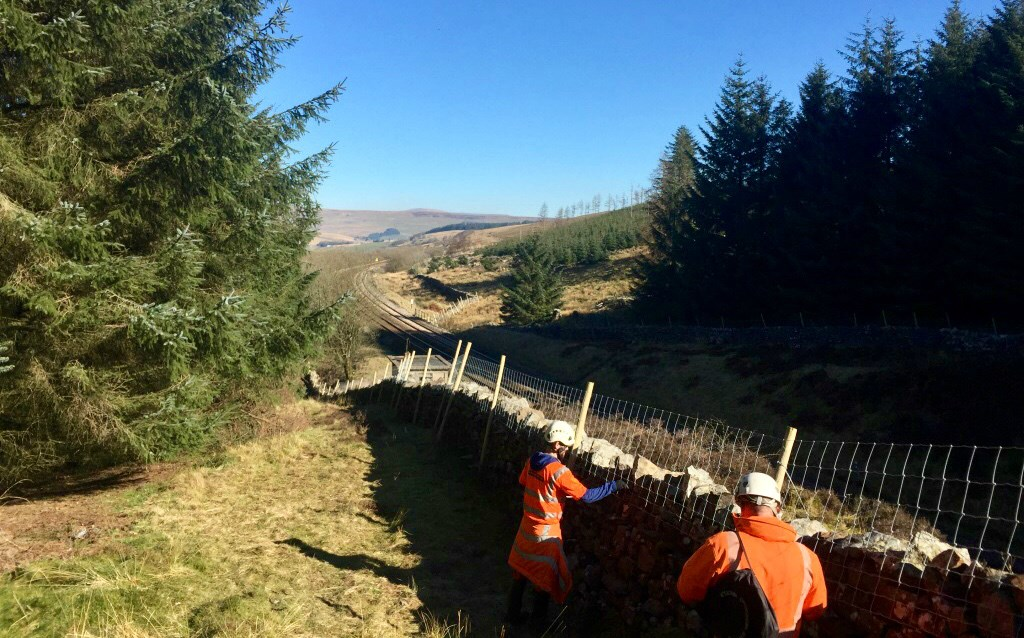 Securing the repaired dry-stone wall by the railway