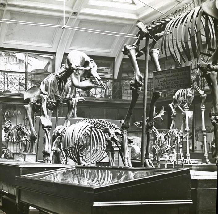 Leeds City Museum: Inside Leeds City Museum when it was located on Park Row in Leeds.
