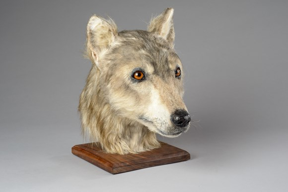 Forensic reconstruction reveals face of man's ancient four-legged friend: 008-000-072-306-R