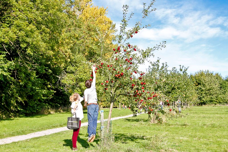 Join in with the apple harvest at Lotherton Hall this weekend: lh2-13-184.jpg