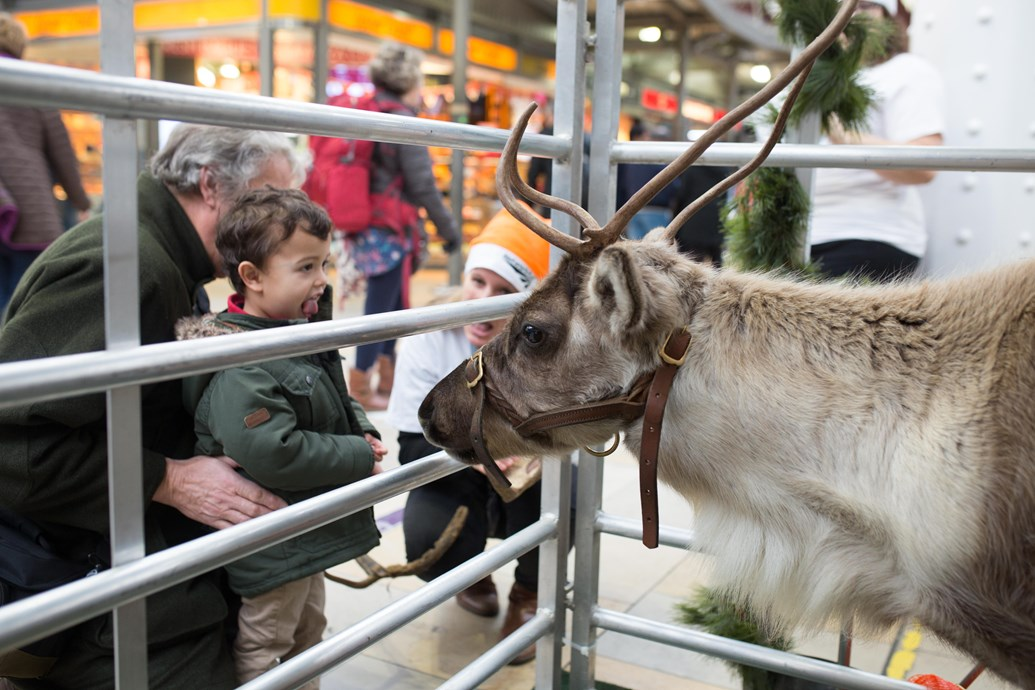 Meet the reindeer event at Paddington Station ahead of Christmas upgrade blitz: Reindeer-5
