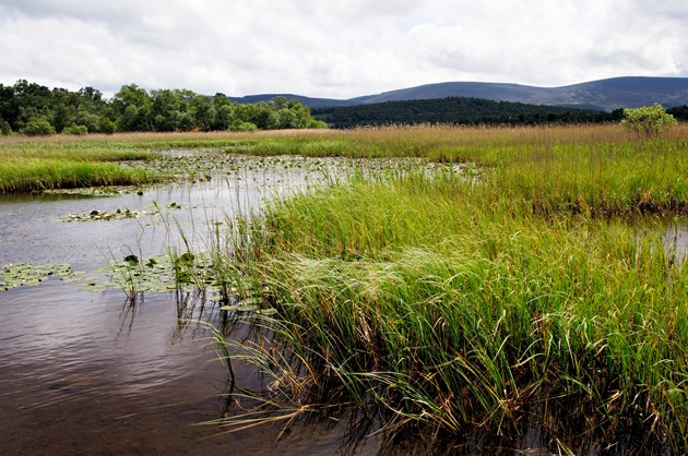 Boaters asked to stay away from Muir of Dinnet loch to protect birds: Loch Kinord, Muir of Dinnet NNR ©Lorne Gill/NatureScot