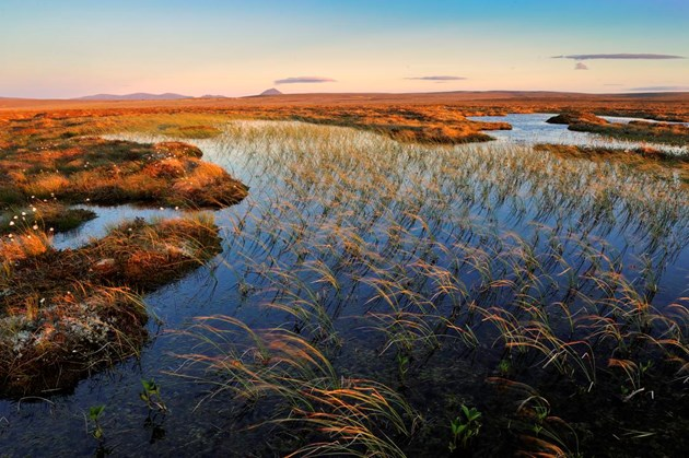Tackling nature loss report – 2021 a 'big year' for nature: Blanket bog at the The Flows NNR. ©Lorne Gill/NatureScot