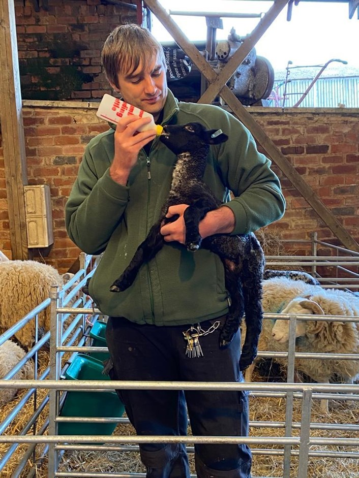 Home Farm's new arrivals: Farmer Joe Green with one of the newborn lambs at Home Farm. Joe is keeping a weekly video blog on the estate's Facebook page.