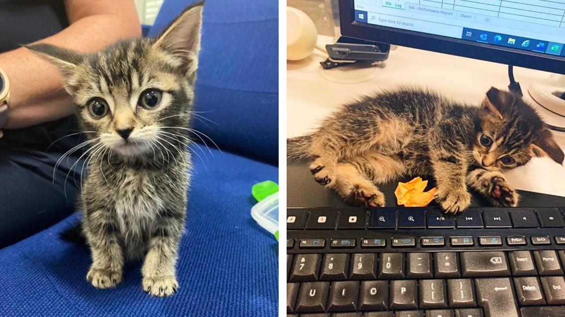 Railway rescue for abandoned kitten left on long distance train: CrossCountry Kitten composite