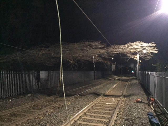 Storm damage affects train services in the West Midlands: The tree which damaged overhead line equipment at Wylde Green