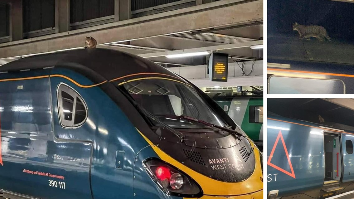 Cat avoids train surfing hitch hike from London Euston to Manchester: Cat on Avanti train roof Euston composite