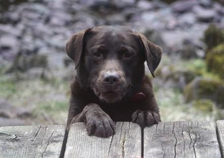 Dog breeding regulations