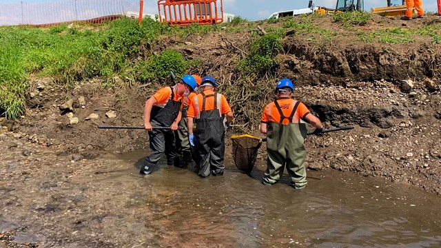 FIsh being caught in drained section of RIver Trent