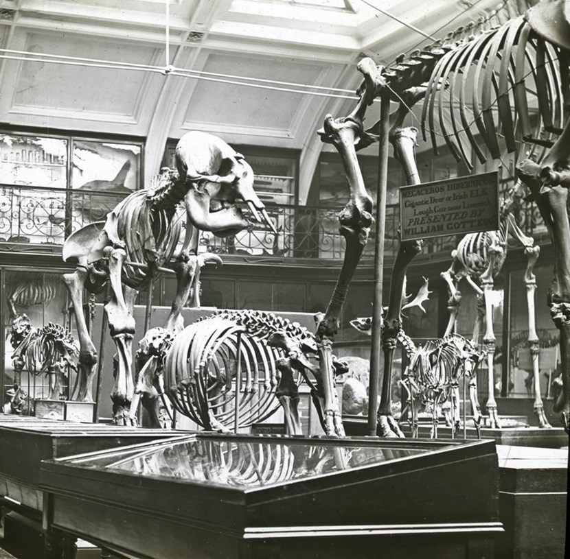 Look back at Leeds's magnificent menageries: animalskeletonslcm.jpg