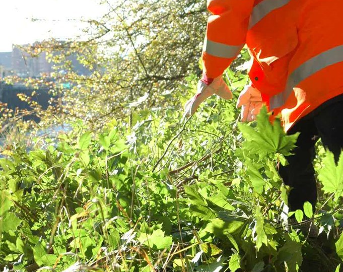 Final stage of railway vegetation clearance in the Falmouth area: Deveg