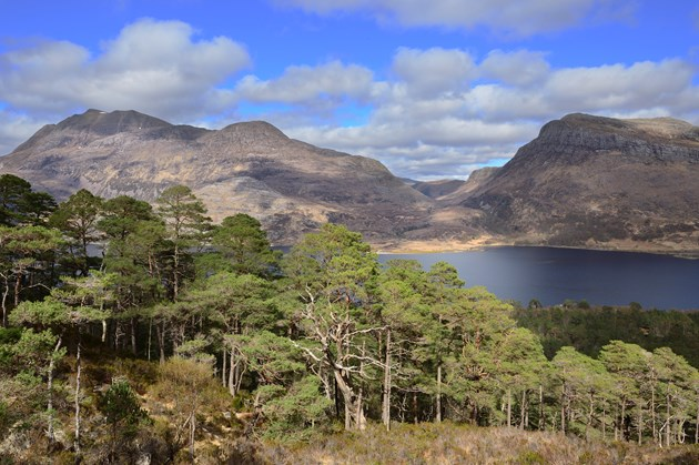 UK scientific first for ancient Caledonian pine forest: Scots pines at Beinn Eighe National Nature Reserve ©Lorne Gill SNH