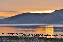 Loch Leven National Nature Reserve-4