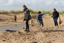 Forvie NNR - SNH staff volunteer day - picking up rubbish on Forvie beach clean - credit SNH