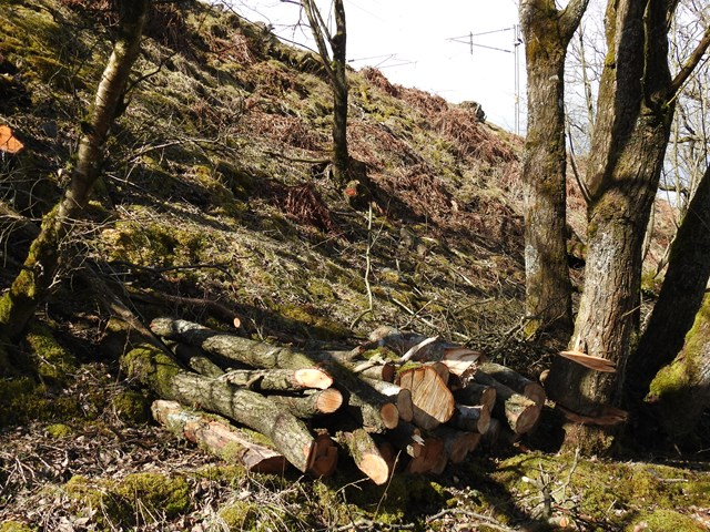 Habitat piles created as part of the Shap cutting wildlife management