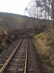 Tree on the line in West Highlands (stock pic): Offering Rail Better Infomation Service (ORBIS) tree database