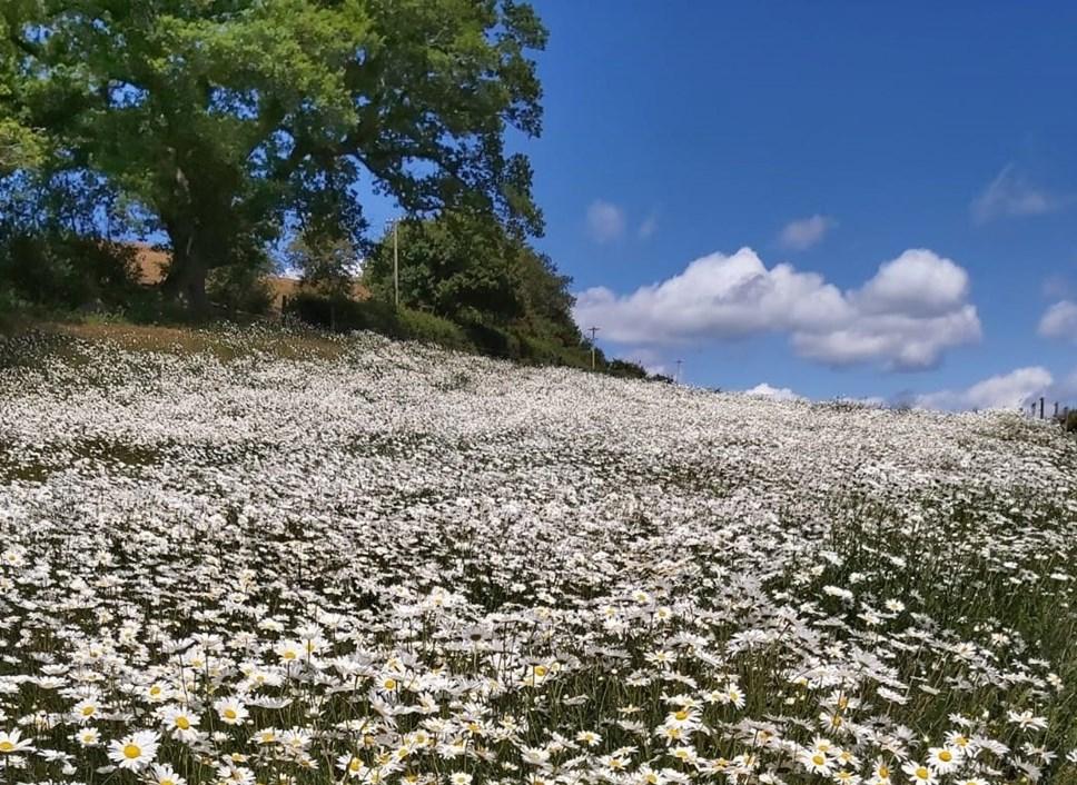 Arla Farmers' Grand Plan For Pollinator Pit Stops Begins To Blossom: Pollinator Pit Stops