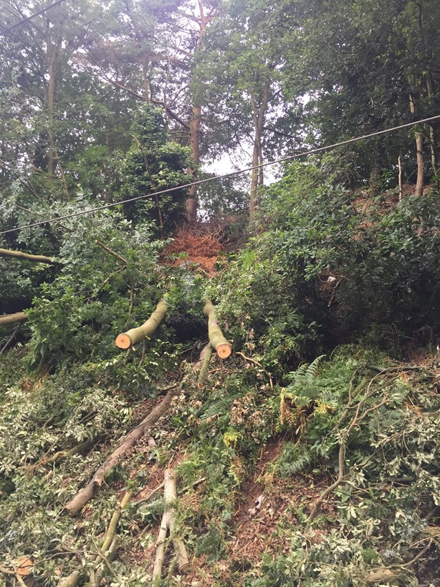 Cross City line south reopens after tree removal and embankment repairs: Cross City line second tree fallen