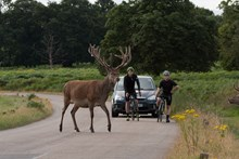LangbeinWildlife StagCrossing and Bikers A
