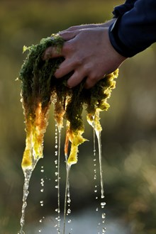 Sphagnum mosses ©Lorne Gill/NatureScot