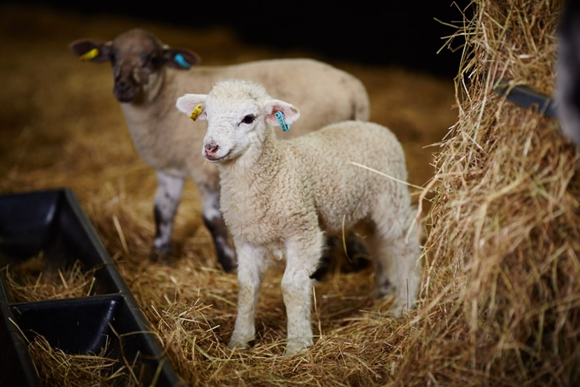 Experience the cuteness of Home Farm's new arrivals this Easter: templenewsam-contacts407-2.jpg