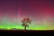 northernlights-d7750: Northern lights - (C) Lorne Gill/SNH - available for one-off use