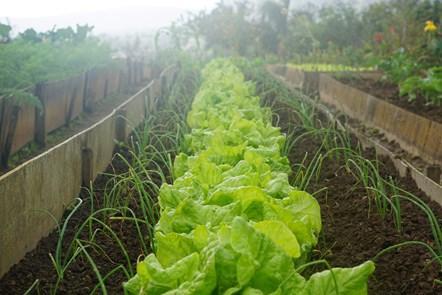 Grow your own in Moray!: Grow your own in Moray!