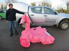 Forvie NNR - SNH Nature Reserve Officer Daryl Short with beach find of inflatable flamingo - credit SNH