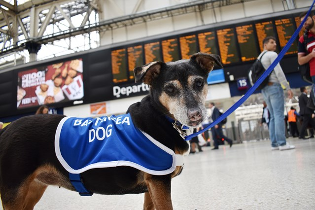 Paw-terloo Upgrade: Battersea dogs lend a paw ahead of bank holiday work: Millie at Waterloo [1]
