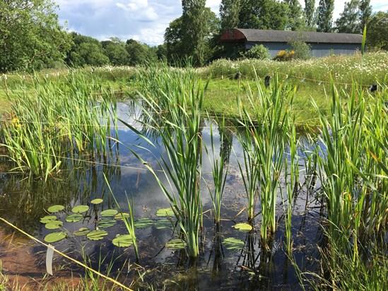 Finham Brook Pond: Finham Brook Pond