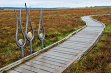 Blawhorn-D0568 jpg m19685 - Sculptures and raised walkway at Blawhorn Moss NNR, Forth and Borders Area.©Lorne Gill-SNH