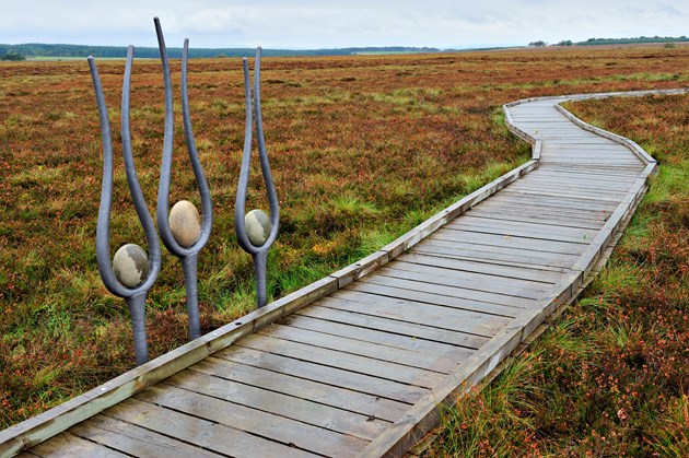 New boardwalk and paths for West Lothian nature reserve: Blawhorn-D0568 jpg m19685 - Sculptures and raised walkway at Blawhorn Moss NNR, Forth and Borders Area.©Lorne Gill-SNH
