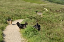 Dogs off their leads ©Lorne Gill-NatureScot