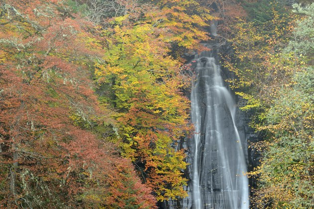 The Falls of Acharn near Loch Tay. Copyright Lorne Gill-NatureScot