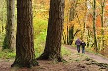 Walkers enjoying woodland at Dunkeld Perthshire ©Lorne Gill 2020VISION PR