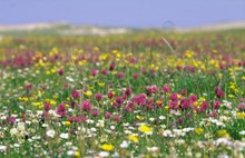 Machair - copyright SNH-Lorne Gill