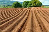 Scotland's Soils website launched: Soil Release 1
